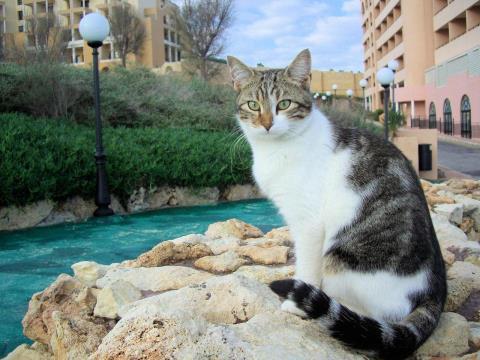 猫成分が不足してきた貴方に贈る猫の画像集 その5 1