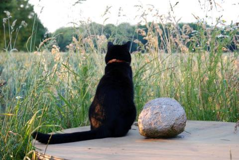 猫成分が不足してきた貴方に贈る猫の画像集 その5 2