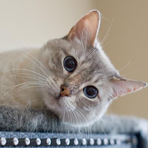 まとめ:つかの間の癒しを?選り抜き猫画像1