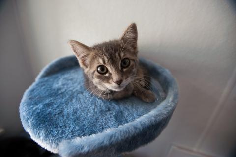 まとめ:つかの間の癒しを?選り抜き猫画像2