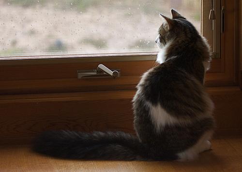 まとめ:つかの間の癒しを?選り抜き猫画像3