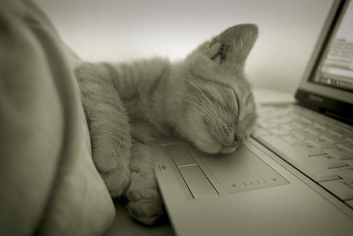 まとめ:つかの間の癒しを?選り抜き猫画像4