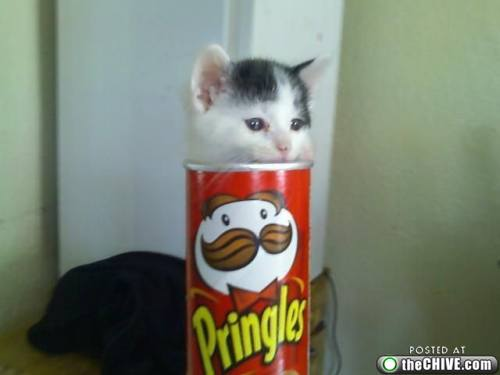 Pringles Cat
