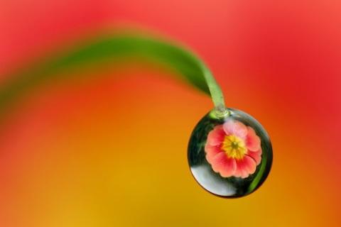 素人カメラマンによる、水滴の中に被写体を投影した幻想的な写真3