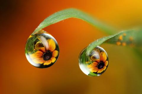 素人カメラマンによる、水滴の中に被写体を投影した幻想的な写真5